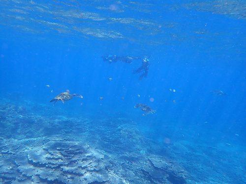 少し集まるウミガメ達も見て周り