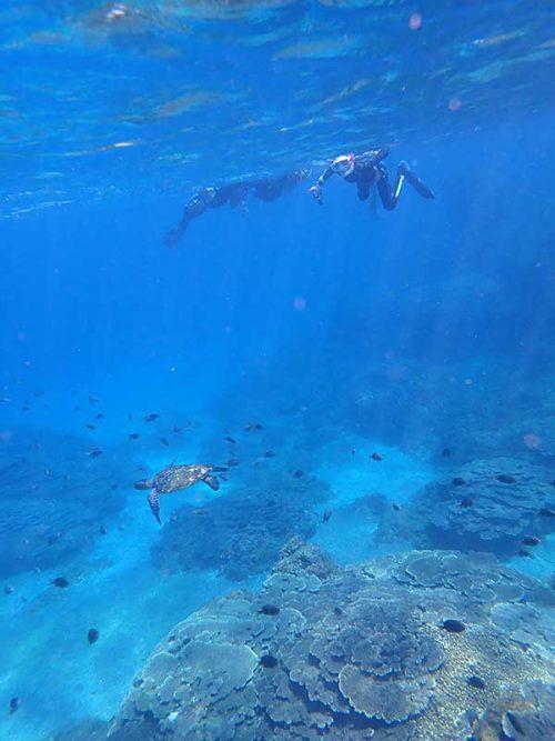 ウミガメ見ながら泳いで戻り