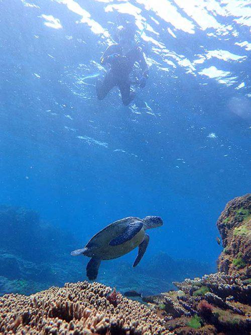 ウミガメ見つつちょっと泳いで行きまして