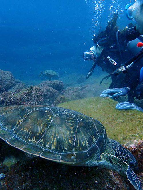 下まで降りてウミガメ達を見て周り
