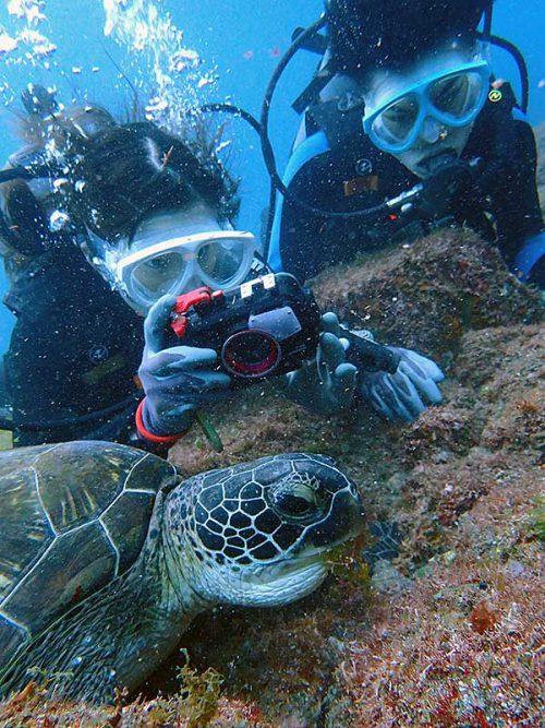 海草食べてたウミガメ撮ったり
