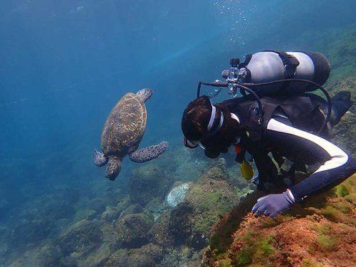 浅場でのんびり泳いでたアオウミガメ