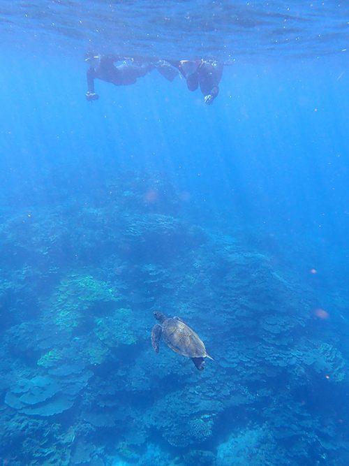 小さいウミガメ泳いでいたり