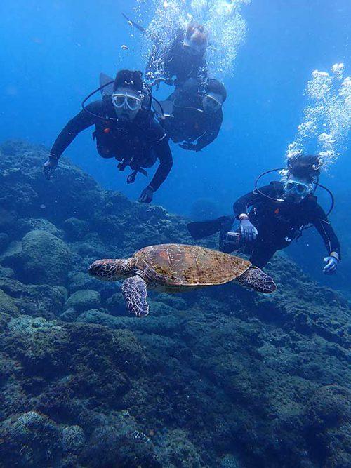 ウミガメ目の前泳いで通り