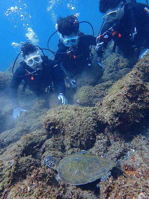 岩の隙間で休憩してたアオウミガメ