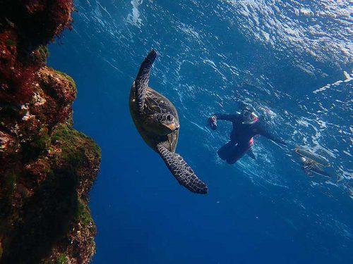 ウミガメ見ながら泳いで周り
