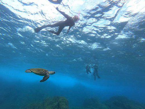 のんびり泳ぐウミガメ達を見て周り
