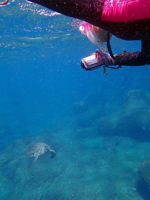 ウミガメ上から撮ったり見たり