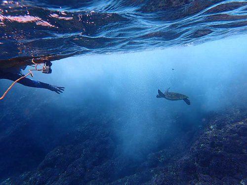 波打ち際にも小さいウミガメおりまして