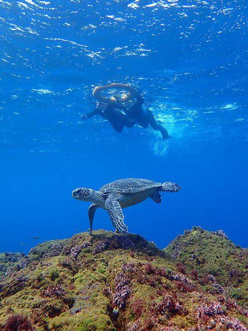 沖出てウミガメ見て周り