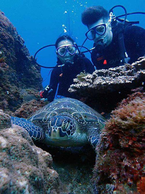 岩の隙間で休んでたウミガメもじっくり眺め