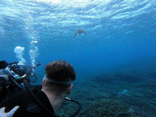 少し泳げばウミガメ見かけ