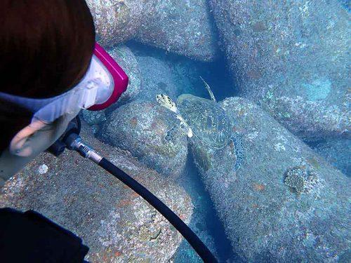 のんびり泳いでたウミガメとか
