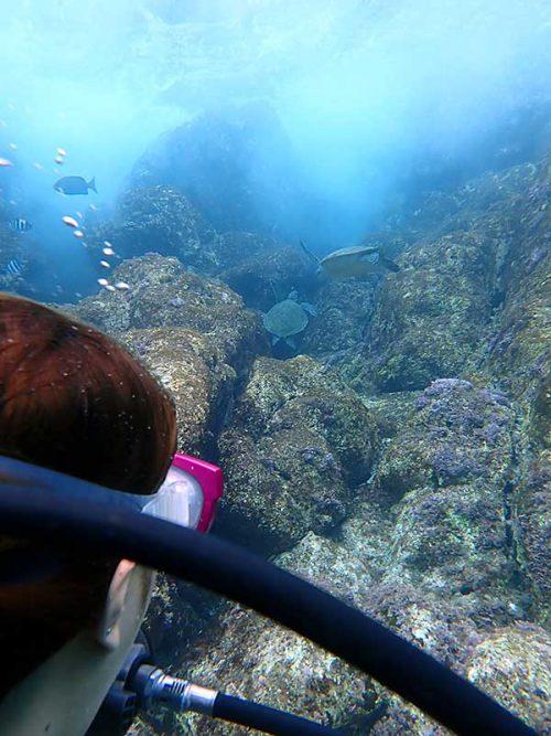 波打ち際に集まっていた小さいウミガメ達
